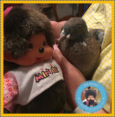 Diana la Monchhichi et Colombine le bébé pigeon - oisillon -pigeonneau - oiseau - gavage