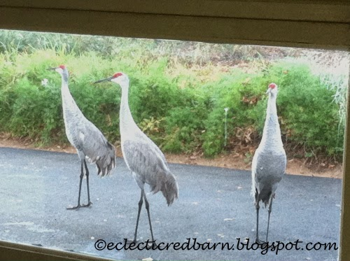 Eclectic Red Barn: Sandhill cranes as seen through the garage