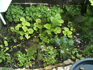 planting plan, gardening, life on pig row, herb garden