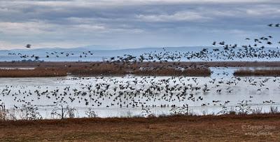 Fertő-Hanság Nemzeti Park, Borsodi-dűlő