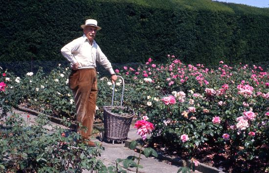 Sir George Burns in the rose garden at North Mymms House in July 1976 Image from the former North Mymms Local History Society, part of the Images of North Mymms Collection