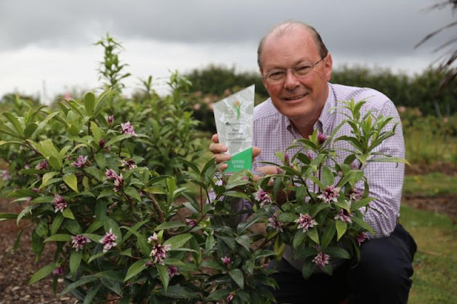WHAT IS THE MOST FRAGRANT DAPHNE?