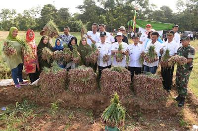 Pemkab Lampung Timur Dukung Pengembangan Budidaya Bawang Merah