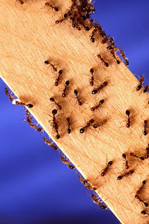 picture of ants on wood