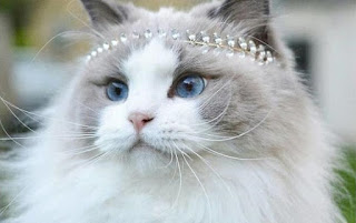 Unduh 94+  Gambar Kucing Yang Sedang Sedih Paling Lucu Gratis