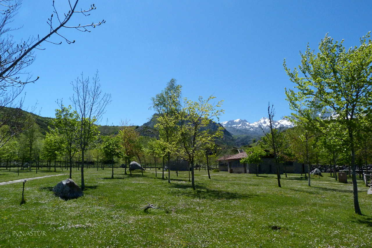 Arboreto - Lagos de Covadonga - Picos de Europa