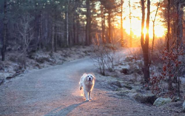 Foto van een hond in het bos