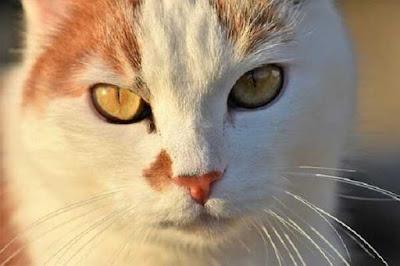 حقائق ترينا مدى روعة القطط الجزء السادس والأخير