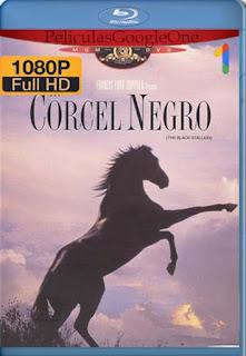 El Corcel Negro [1979] [1080p BRrip] [Latino-Inglés] [GoogleDrive] RafagaHD