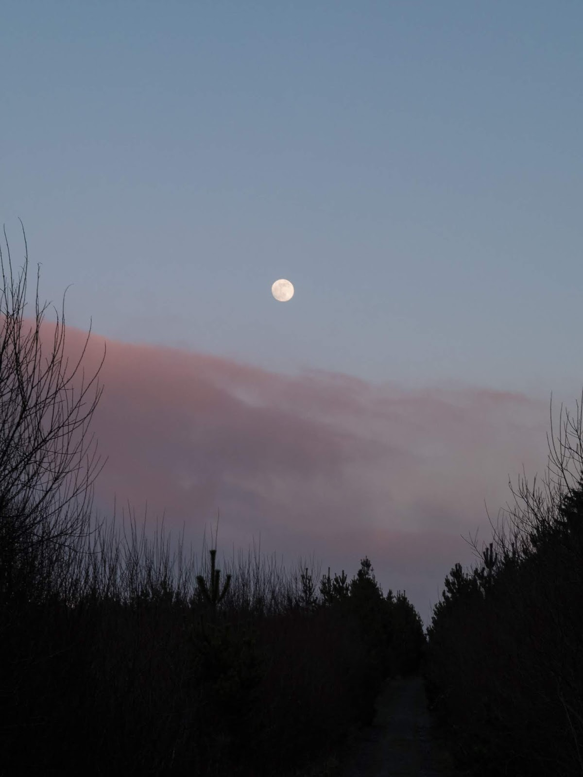 Moon rise over the forestry in the Boggeragh Mountains on a light blue sky and some light pink clouds.