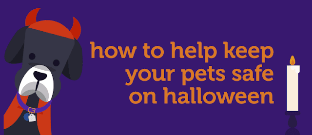 "Petco cartoon dog in a devil costume with text ""how to help keep your pets safe on halloween"" (linked button)"