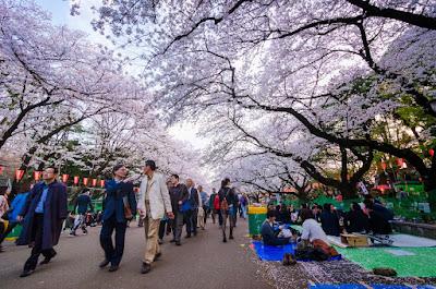 Menikmati Musim Semi Di Jepang