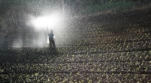Pengertian pupuk adalah bahan organik atau pun anorganik yang diberikan ke dalam tanah untuk menggantikan unsur hara yang telah hilang dari dalam tanah dengan tujuan produksi tanaman dapat mengalami peningkatan dengan keadaan lingkungan yang bagus. Pengertian pemupukan adalah suatu usaha dalam melakukan perbaikan kesuburan tanah dengan memanfaatkan pupuk sebagai pengganti unsur hara di dalam tanah. Secara garis besarnya, pupuk terbagi dari dua jenis yaitu pupuk organik dan pupuk anorganik. ebeberapa teknik pemupukan yang biasanya dilakukan dalam pemberian pupuk pada tanaman adalah sebagai berikut (Saifudin, 2010): Teknik penyebaran, Teknik plow sole placement, Teknik side band placement, Teknik di dalam barisan, Teknik dressed atau eknik side dressed, dan Teknik penyemprotan.