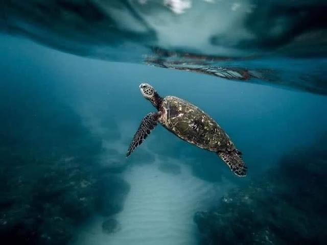කැස්බෑවෙක් කතා කරයි...🐢🐢🐠🦐🦀 (Kasbawa - A Turtle Speaks) - Your Choice Way