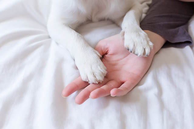 Why Does My Dog Put His Paw On Me? What Does It Mean?
