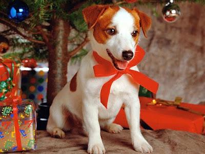 chien comme cadeau de noel