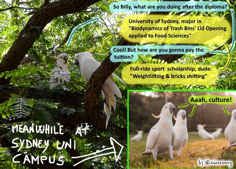 Asutralian Cockatoos and the Trash Cans' lid opening (by @sciencemug)