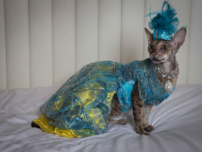 Coco Cornish Rex Couture Fashion NYC