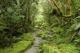 NATURAL VEGETATION -WHY ARE FORESTS NECESSARY?-Environment -Geography