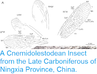 http://sciencythoughts.blogspot.co.uk/2013/09/a-cnemidolestodean-insect-from-late.html