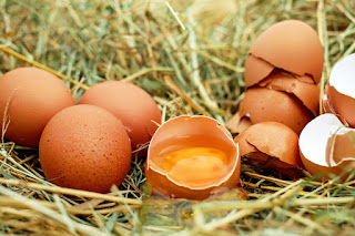 telur ayam sehat