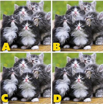 Which image is different? image 29