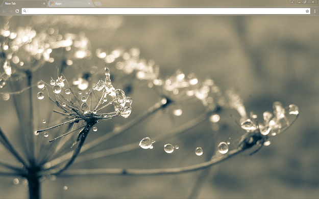 Cobweb Google Theme