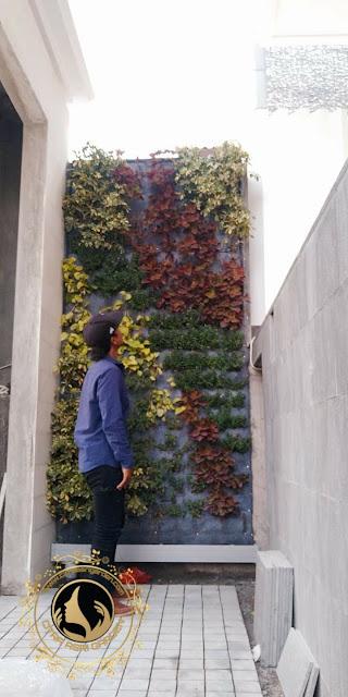 Tukang Taman Vertikal Sidoarjo