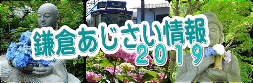 2019鎌倉あじさい情報