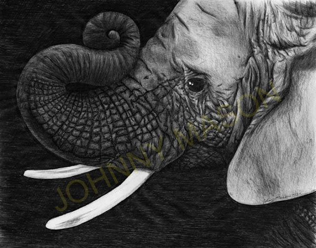 Elephant print by Johnny Mason