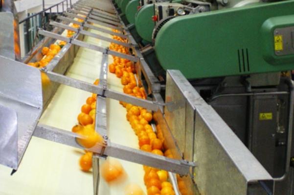 """Οι """"Αργολικοί Κήποι"""" ζητούν γεωπόνο για το συσκευαστήριο πορτοκαλιού στην Αγία Τριάδα Ναυπλίου"""