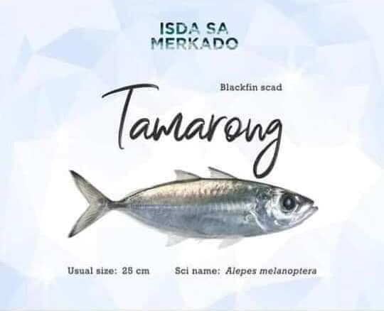 Isda Tamarong (Blackfin Scad)