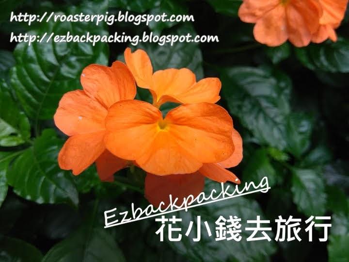 香港雀尾花