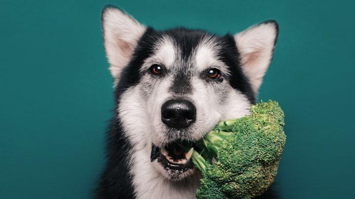 mountain-dog-diet