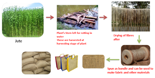 Fibre extraction from Jute Stem, NCERT Class 6 Science Fibre to Fabric, Jute Fibres