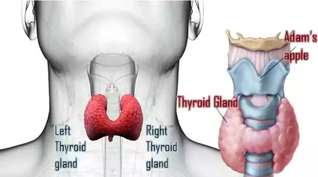 What are thyroid problems? Types of thyroid and home remedies.