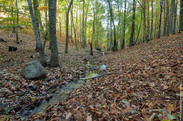 naturaleza otoño Castañar de El Tiemblo