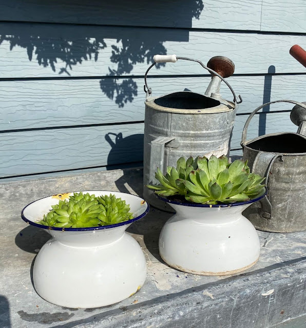 Photo of two enamelware spittoons with hen & chicks.