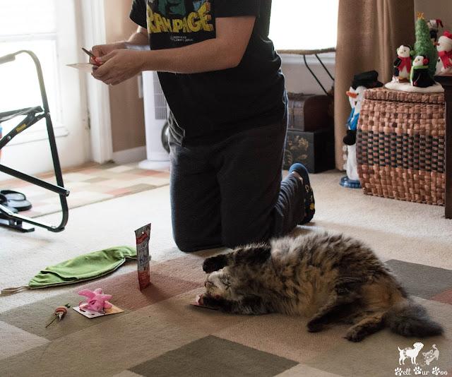Bell Fur Zoo - Christmas Pressies (©Bell Fur Zoo)