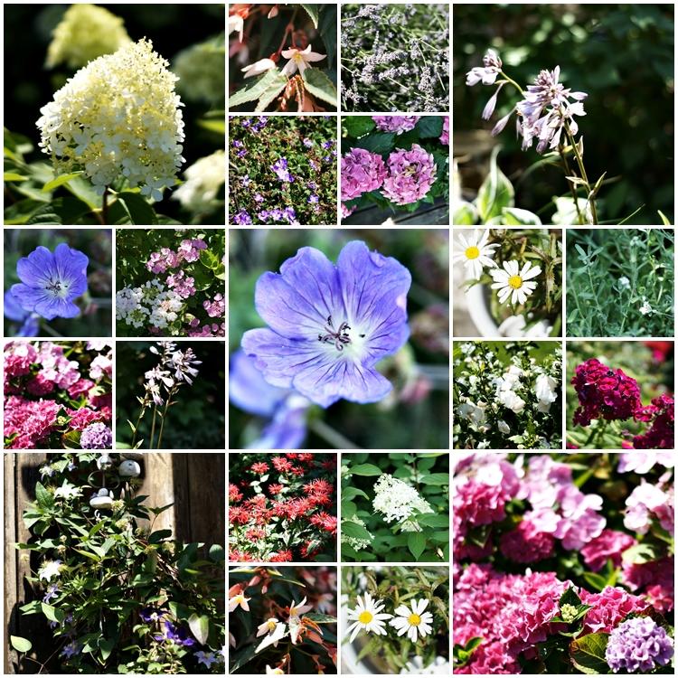 Blog & Fotografie by it's me! - Collage aller Blühpflanzen aus dem Garten