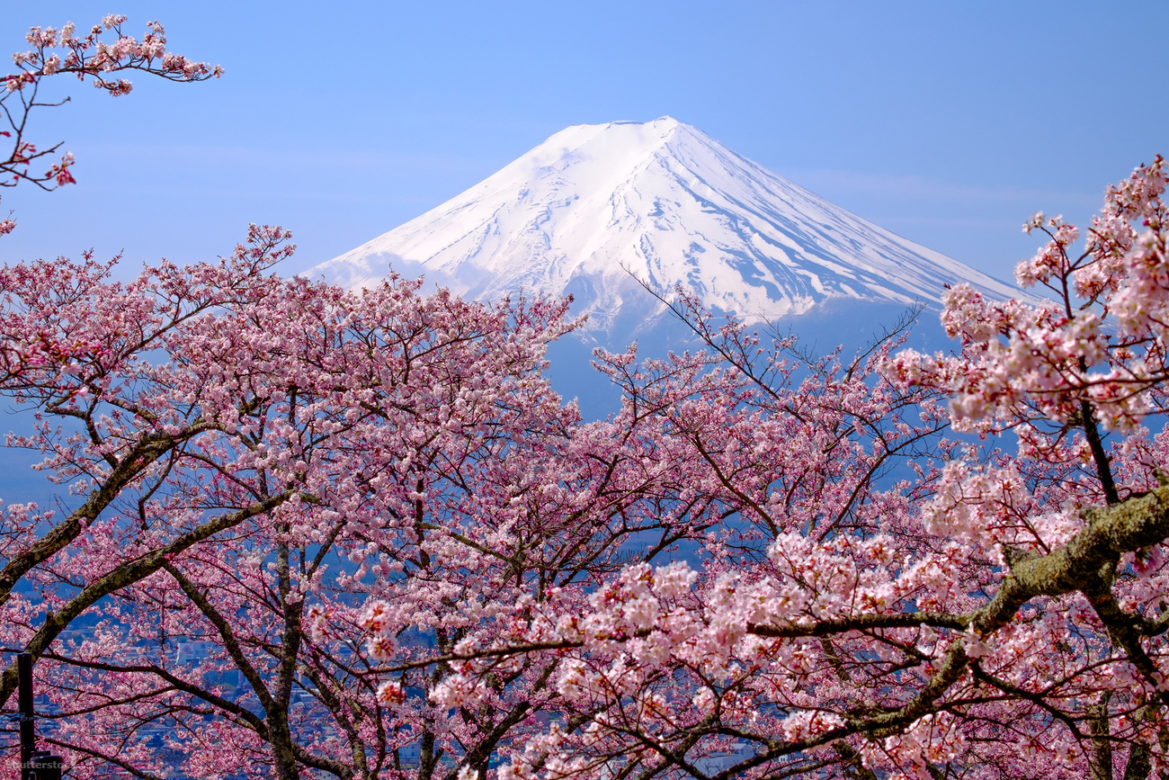 Cherry blossom season, Mount Fuji, Japan - UK travel blog