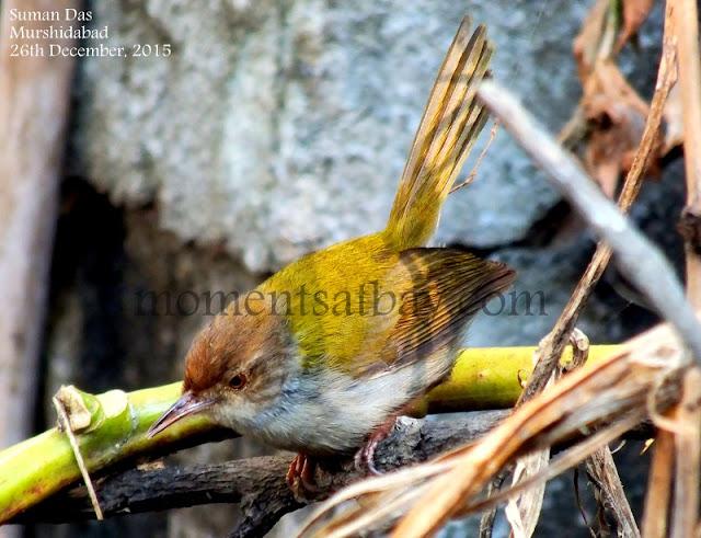 Nature's Warbler momentsatbay