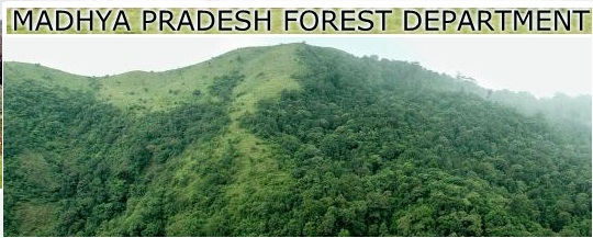MP Forest Department Recruitment Notification 2017 Apply Online