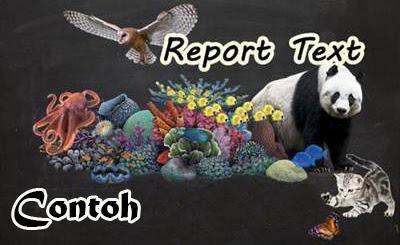 Contoh Report Text Bahasa Inggris Terbaru dan Artinya 10 Contoh Report Text Bahasa Inggris Terbaru dan Artinya