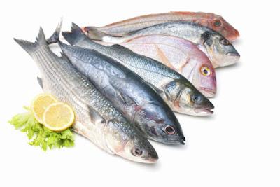Peluang Usaha Budidaya Ikan Konsumsi Secara Kreatif dan Inovatif