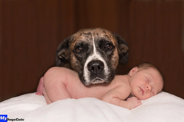 how to prepare your dog for a newborn baby how to prepare my dog for a newborn baby how to prepare your dogs for a baby how to prepare your dog for a baby how to prepare my dogs for a baby how to prep your dog for a baby how to prepare my dog for a baby  dog baby teeth dog babysitting dog baby carrier dog baby announcement dog baby bjorn dog baby gate dog baby aspirin dog babysitters dog baby costume dog baby shower dog baby announcement shirt dog baby aggression dog baby accident dog baby announcement bandana dog baby aspirin dosage per pound dog baby aspirin dosage chart a dog baby aspirin a dog babysitting a dog baby shower a dog baby aspirin for pain a dog baby newborn a baby dog is called a baby dog name a baby dog crying dog baby book dog baby bottle dog baby blanket dog baby bag dog baby booties dog baby backpack dog baby bump dog baby clothes dog baby carriage dog baby costume creepy dog baby crib dog baby carrots dog baby car seat dog baby dolls dog baby dog dog baby diapers dog baby drawing dog baby dress dog baby death dog baby delivery dog baby delivery video d o g dog baby baby d dog grooming baby d dog baby d dog daycare dog baby einstein dog baby elephant costume dog baby eyes dog baby eggs dog baby einstein pinterest dog eats baby dog eating baby poop dog eats baby wipes e trade baby dog dog baby food dog baby formula dog baby fence dog baby food diet dog baby formula milk dog baby funny video dog baby fangs dog baby funny video download dog baby gender reveal dog baby gifts dog baby gate amazon dog baby gif dog baby game dog baby gate for stairs dog baby generator dog baby harness dog baby hair dog baby halloween costumes dog baby house dog baby husky dog baby hybrid dog baby human dog baby hawick dog baby introduction dog baby items dog baby interaction dog baby immune system dog baby is called dog baby images dog baby in hindi dog baby in korean a dog baby dog baby jogger dog baby joke meme dog baby joke dog jealous baby dog baby jumper dog baby j