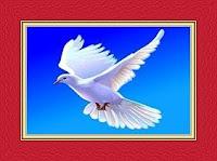 Dove Dream Meaning and Interpretations – DREAMLAND