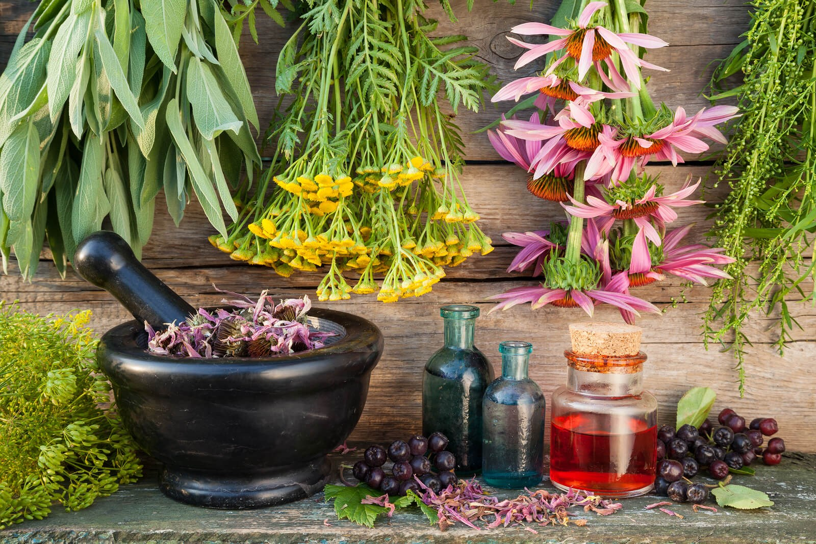 Pianta Simile Al Rosmarino altre piante utili per i capelli