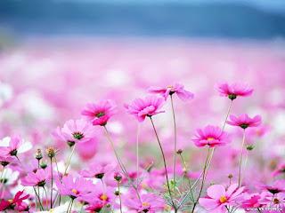 florecillas-silvestres