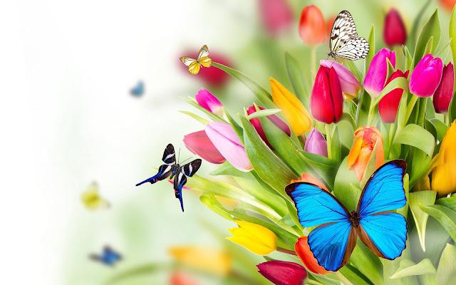 Wallpaper met vlinders en tulpen in de lente